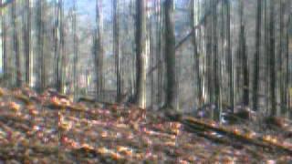 Wild Hogs in Ohio -1