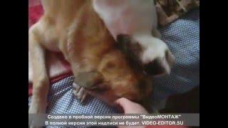 Закрытый домашний приют для особенных животных Могилев