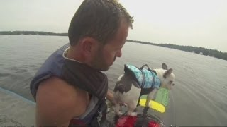 Wakesurfing Dog: Meet Enzo The Wakesurfing French Bulldog