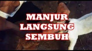 """Pada video kali ini saya akan membahas tentang penyakit yang cukup populer di Indonesia, yaitu : """"An."""