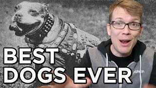 Top 10 Best Dogs Ever