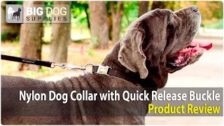 Neapolitan Mastiff And Other Large Dogs Wearing Waterproof Nylon Dog Collar