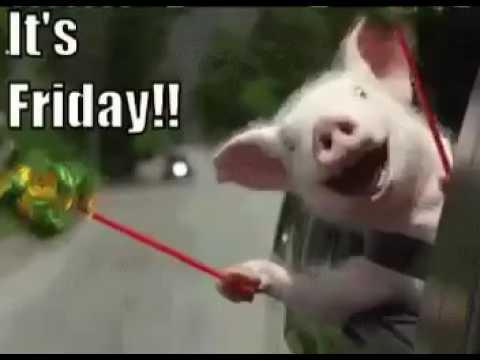 Real Pig Happy Its Friday 😂TGIF YouTube