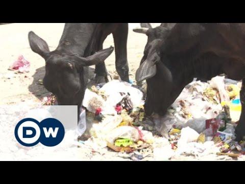 Indien: Hindu-Nationalismus und die heilige Kuh | DW Deutsch