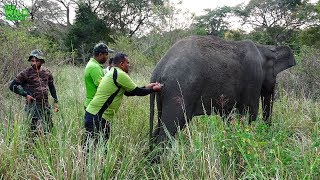Фото How To Sneak Up Behind An Elephant With Injuries. Wildlife Medical Operation