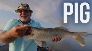 big walleye fishing on the pete