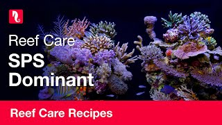 SPS Dominant | Reef care recipe
