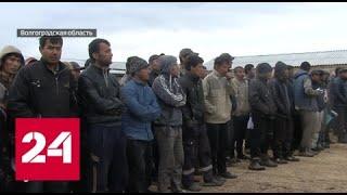 Смотреть видео Под Волгоградом нелегалы выращивали отравленные овощи - Россия 24 онлайн