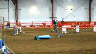 Gem City Dog Agility - Exc B Std 2/27/11