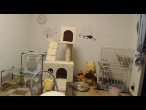 子猫のお部屋ライブ Kitten rooms Live