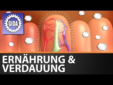 GIDA - Ernährung & Verdauung des Menschen - Biologie - Schulfilm - DVD (Trailer)