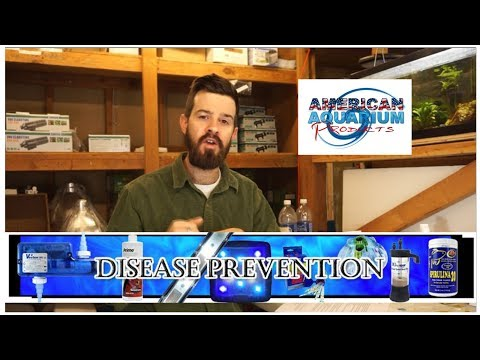 Aquarium Disease Prevention | Sick Fish Help