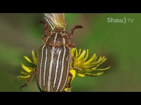 Nature Photography on Shaw TV