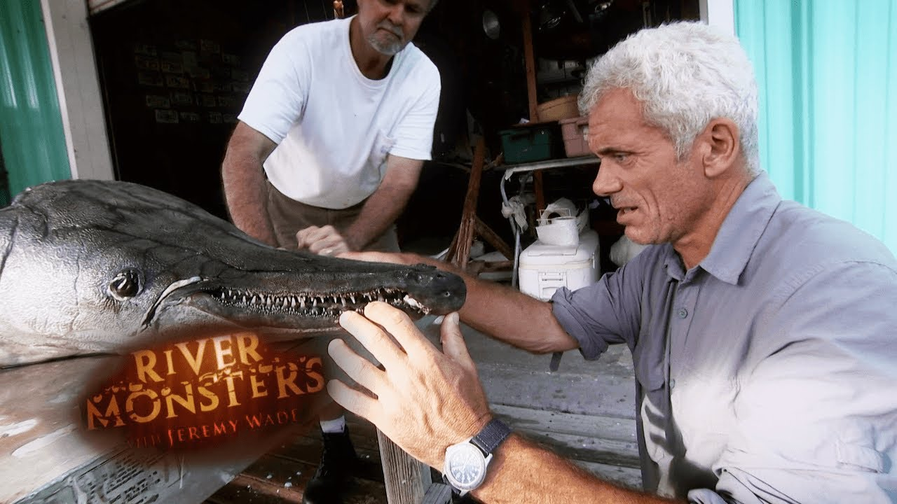 Inspecting Body Of 327 Pound Alligator Gar | CROCODILIA Crocodilia River Monsters