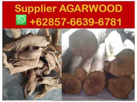 Suppliers +62 857-6639-6781 ( WhatsApp) , Agarwood oil wholesale