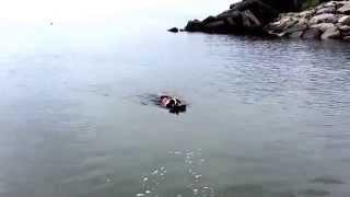 海山川を満喫した1日でした 初泳ぎにしては上手でしょ?