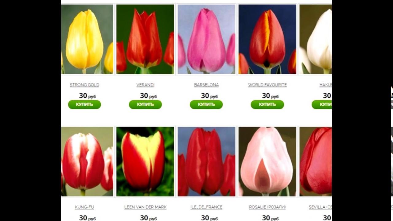 Предлагаем луковицы тюльпанов оптом и в розницу по лучшей цене в москве. Купить луковицы тюльпанов в интернет магазине bbcom. Ru.