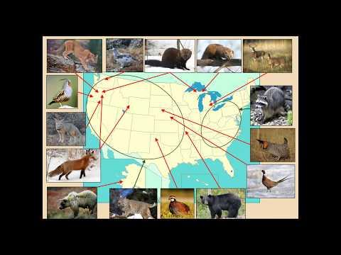 SCI Foundation Wildlife Conservation Webinar Series: Western U.S. Bobcat Project