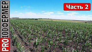Крупные капли против ветра. Обзор кукурузы. Часть 2.