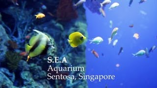 Highlights of SEA Aquarium Singapore in HD