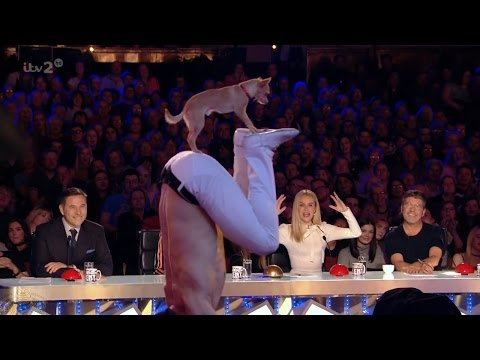 Thumbnail: Britain's Got More Talent 2017 Christian Stoinev & Percy the Acrobatic Dog from AGT Full Clip S11E