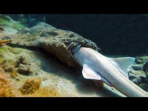 10 pesci da acquario pi aggressivi in assoluto youtube for Pesci acquario