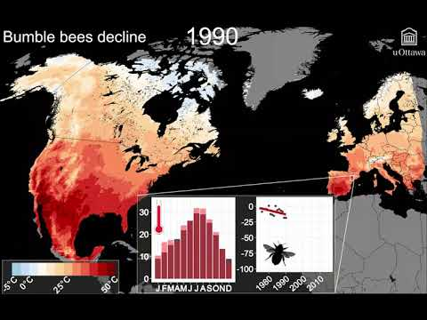 Bumble bee decline