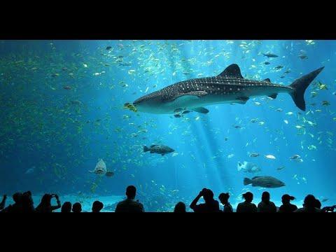 Dubai Aquarium & Underwater Zoo (Most Expensive Experience)