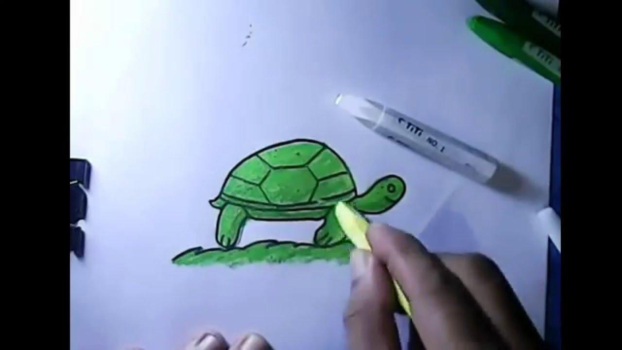 Cara Menggambar Untuk Anak Anak Kura Kura Funnydogtv