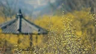[대한민국100대관광지] 샛노란 봄 풍경을 만나다, 전…