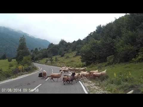 Pastora sufre brutal ataque de una oveja