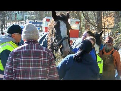 شاهد: إنقاذ حصانين من بحيرة متجمدة في بنسلفانيا  - نشر قبل 28 دقيقة