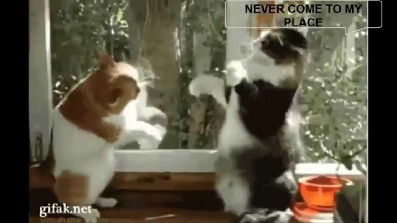 Funny Animal Videos 2014