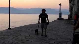 Εκπαίδευση σκύλων | Κοινωνικοποίηση της Ziggy 1