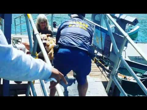 VICIOUS PIT BULL ATTACK ON CATALINA ISLAND!