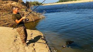 Кормил три дня и вот что получилось. Сазан река Ахтуба.