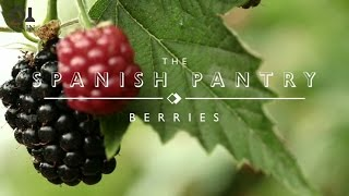 The Spanish Pantry: Berries