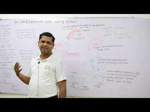 Life Cycle of Plasmodium vivax (Benign Tertian Malaria Parasite) by Dr Vikas CV