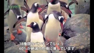 南米に生息するペンギンを保護を考える映像です.