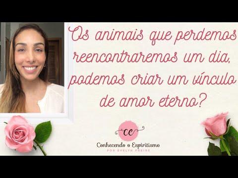 Os animais que perdemos algum dia  vamos encontrá-los? Podemos criar um vínculo de amor eterno?