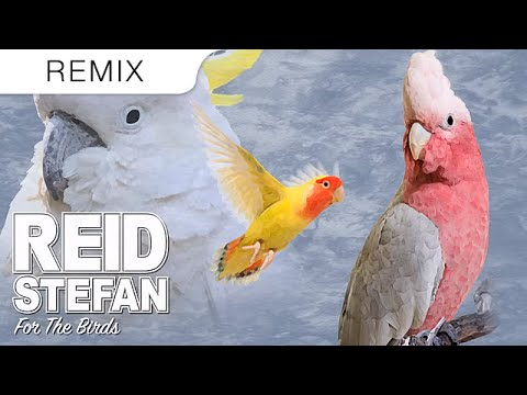 Reid Stefan - For The Birds (Ray Volpe Trap Remix)