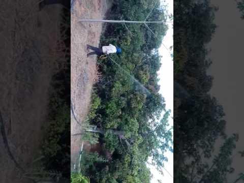 Green care organic farm spraying of organic pesticides on mango trees