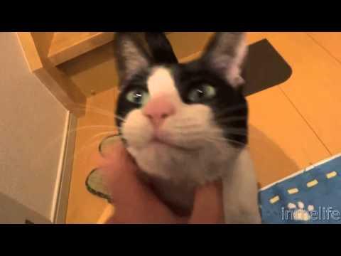 Кот встречает хозяина