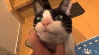 Кот встречает хозяина(, 2014-03-30T09:47:39.000Z)