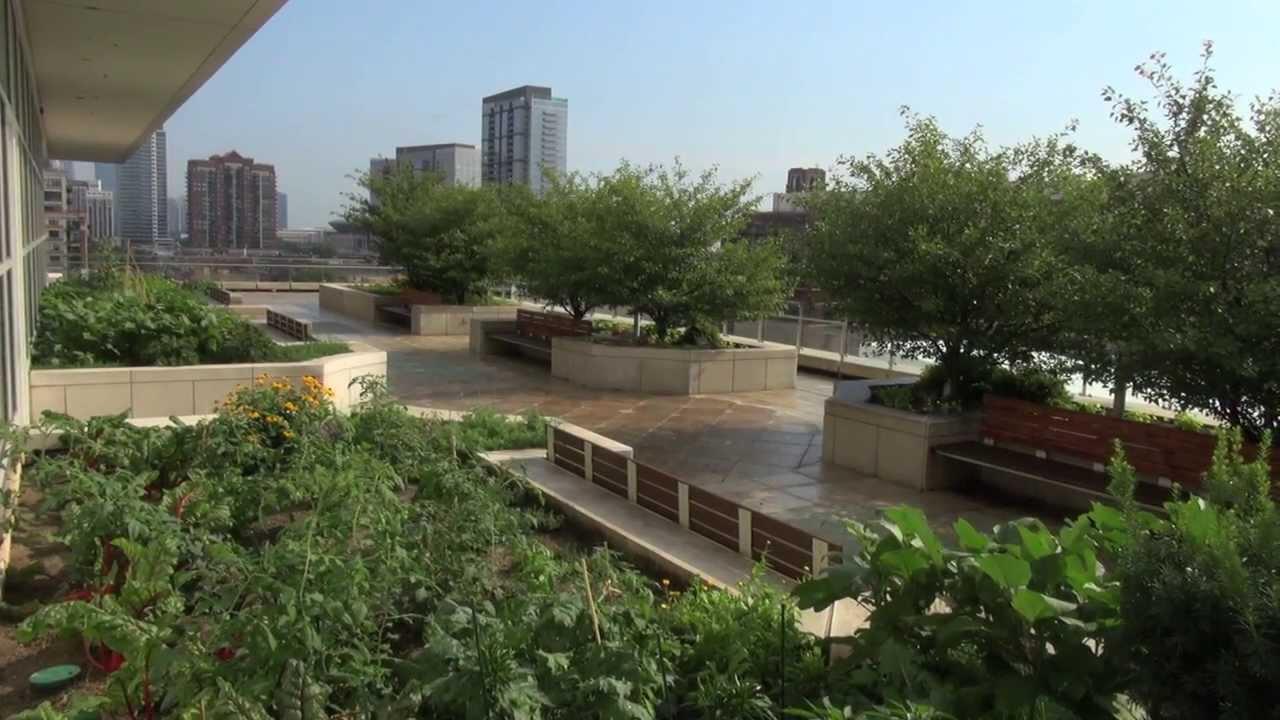 Chicago Botanic Garden Creates Largest Urban Rooftop Farm