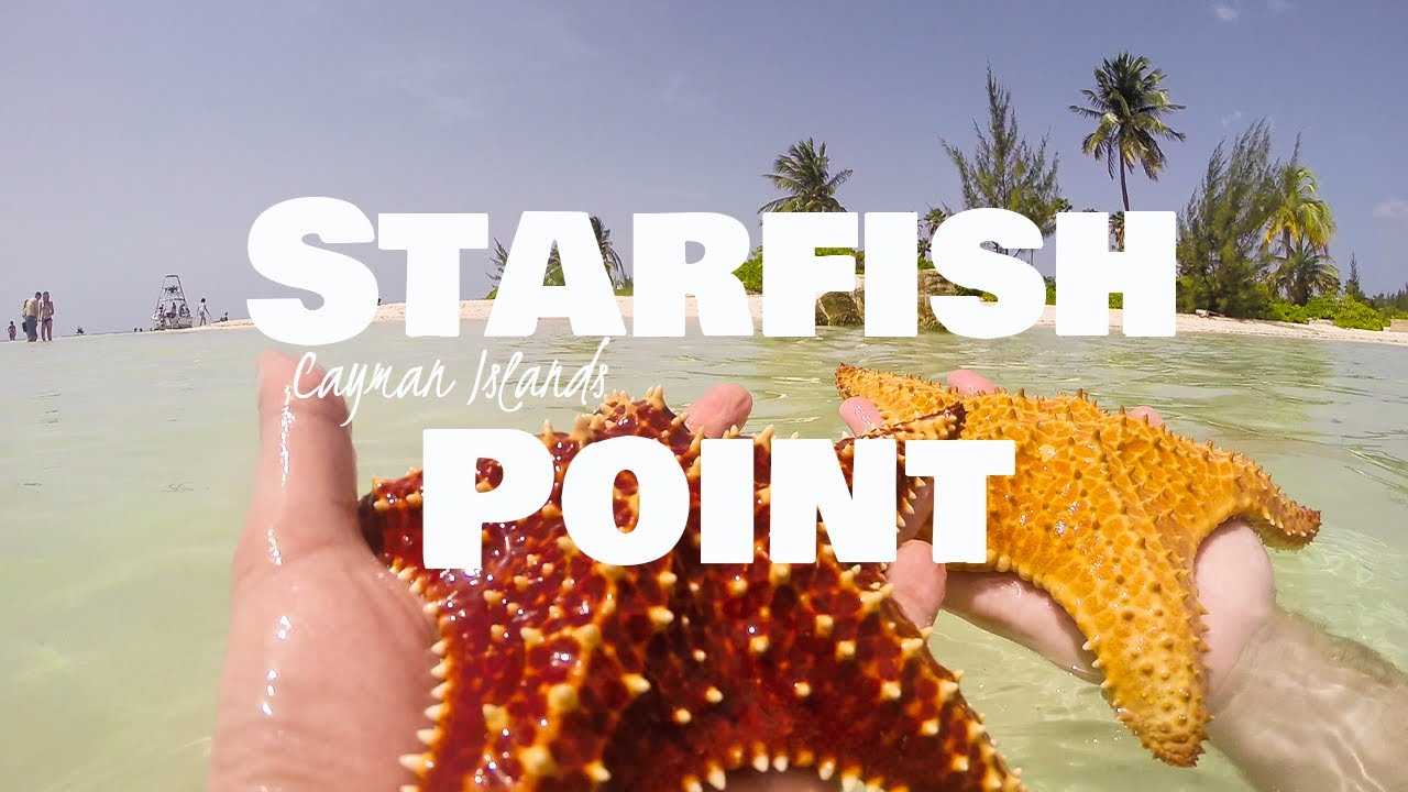 CAYMAN ISLANDS tourist attractions! Stingray City & Starfish Point