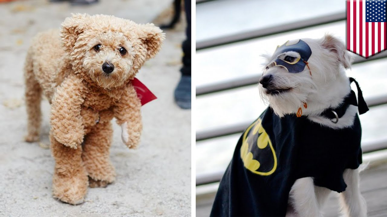 Halloween pet costumes for 2016 will have you laughing and sharing like crazy - TomoNews & Halloween pet costumes for 2016 will have you laughing and sharing ...