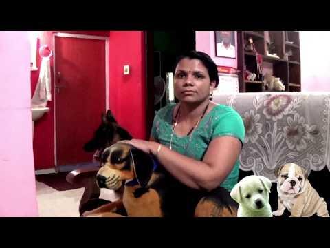 sajan dog training and caring[ certified academy ]kottayam,pala call 09946515222