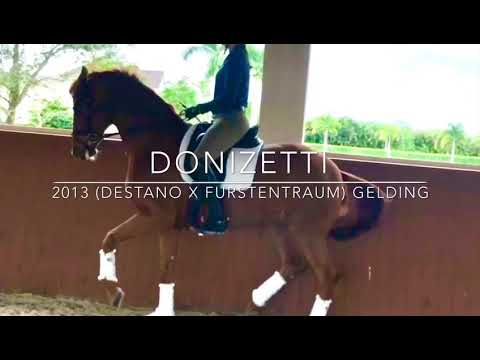 Donizetti- 2013 16.2hd Imported Westphalian Gelding Trained By Olympian