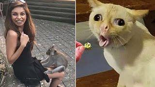 Эти Случаи с Животными Хочется Пересмотреть Дважды